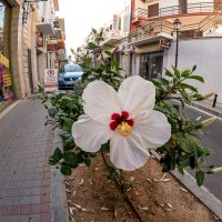 Просто цветок :: Виктор Льготин