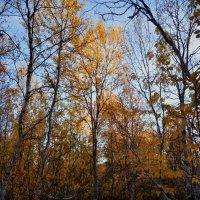Осень в Заполярье :: Валерия Ширковцова
