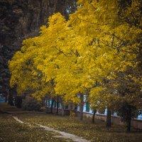 Вот и осень... :: Александр Рамус