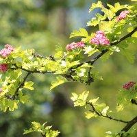 Цветочный хоровод-611. :: Руслан Грицунь