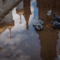 Утренние купания :: Александр Янкевич