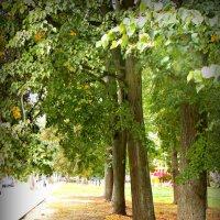 Осень... :: Natalisa Sokolets