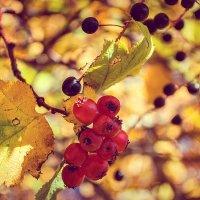 Осень.. :: Светлана