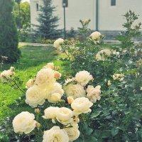 о розах... :: Лена L.
