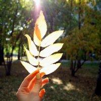 Осень :: Евгения Бродская