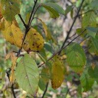 Осенние листья. :: zoja