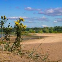 Цветы на дюне :: Виталий