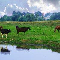 сельские картинки :: георгий  петькун