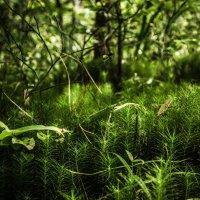 В лесу. :: Наталья Лысенко