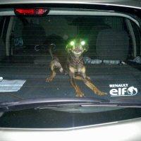 инопланетный страж авто :: Александр Прокудин