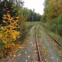 Первая тренировка Золотой Осени :: Андрей Лукьянов