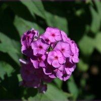 Цветочный колобок. :: Anatol Livtsov