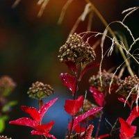 Осень. :: Андрей Кулешов