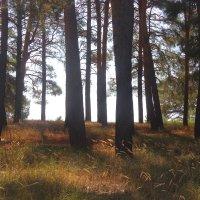 ☼ в лесу- :: Владимир Суязов