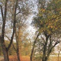 Осень начинается :: Юрий Гайворонский