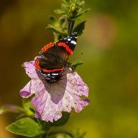 Бабочка сентября :: Александр