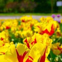 Желтые цветы :: Evgen Polyakov