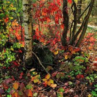Лесов осенних витражи... :: Лесо-Вед (Баранов)