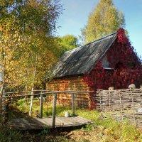 В дворике моем тихо бродит осень :: Павлова Татьяна Павлова