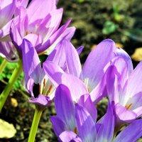 Неожиданно...вроде не весна :: Сергей F