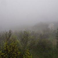 Туман :: Zifa Dimitrieva