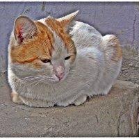 Очередной (Коты и кошки моего подъезда) :: muh5257