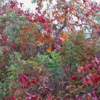 Осенние краски :: Евгений Мельников
