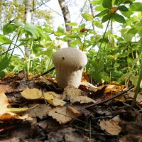 Кто это такой, тоже гриб ? :: Damir Si