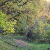 Сказочный лес :: Дмитрий Чулков