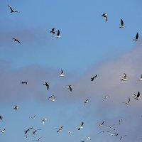 .......и почему люди не летают, как птицы.... :: Tatiana Markova