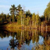 лесное озеро :: Вячеслав Завражнов