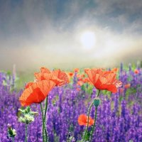 Купание в весеннем тумане :: viton