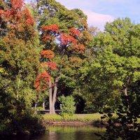 Осень на Елагином Острове :: ирина Пронина