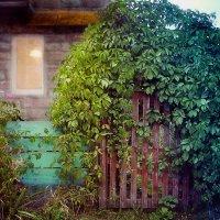 Калитка в волшебный сад. :: Лана Минская