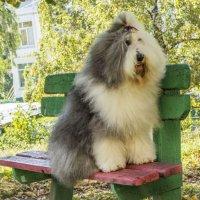 Маня на скамеечке :: Лариса Батурова