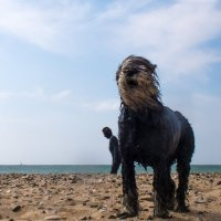 Собака страшная. :: Алексей Сараев
