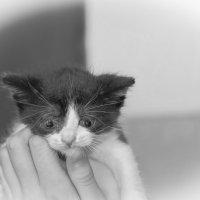 Котик малый. :: Александр Калинин