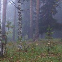 Туманное утро :: Исаков Александр