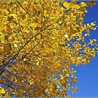 Осенняя позолота :: Любовь Чунарёва