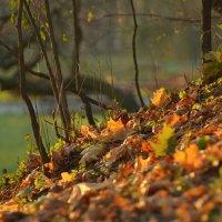 Осенняя палитра :: Maks :))