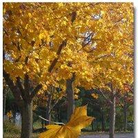 ...Пасьянсом карточным с ветвей листву роняла... :: Эля Юрасова