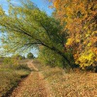 Дорога вдоль осени :: Зоя Мишина