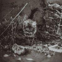 Котенок :: Ксения ПЕН