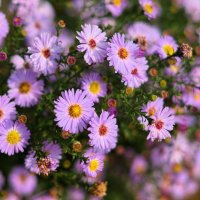Осенние цветы :: Александр Гапоненко