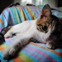 Кошка :: Allekos Rostov-on-Don