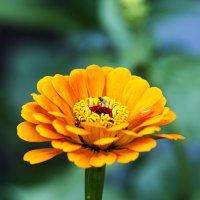 Цветок и муха :: Анатолий Иргл