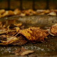 осенние листья :: סּﮗRuslan HAIBIKE Sevastyanovסּﮗסּ