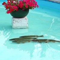 Рыбка в фонтане :: Лидия (naum.lidiya)