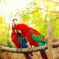 Птички :: Александр ♣