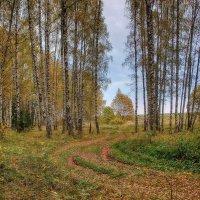 Прогулка в осеннем лесу... :: марк